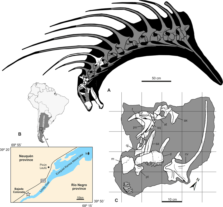 This Week in Dinosaur News: A new Amargasaurus relative and an amber-preserved dinosaur foot